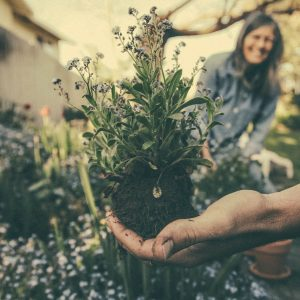 gardeners in mallorca